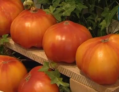 Крупные спелые помидоры