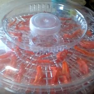 Вкусные вяленые помидоры в электросушилке