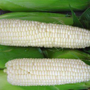 Белая кукуруза сорт