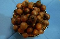 Съедобные лесные ягоды